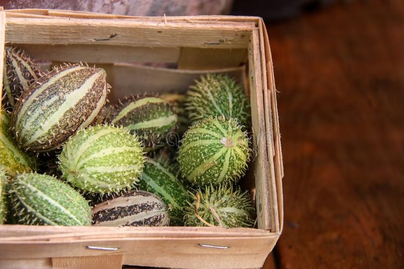Cucumisanguria, cackrey, kastanjebruine komkommer, het Westen Indische augurk en het Westen Indische pompoen Deco-fruit gele en g royalty-vrije stock foto