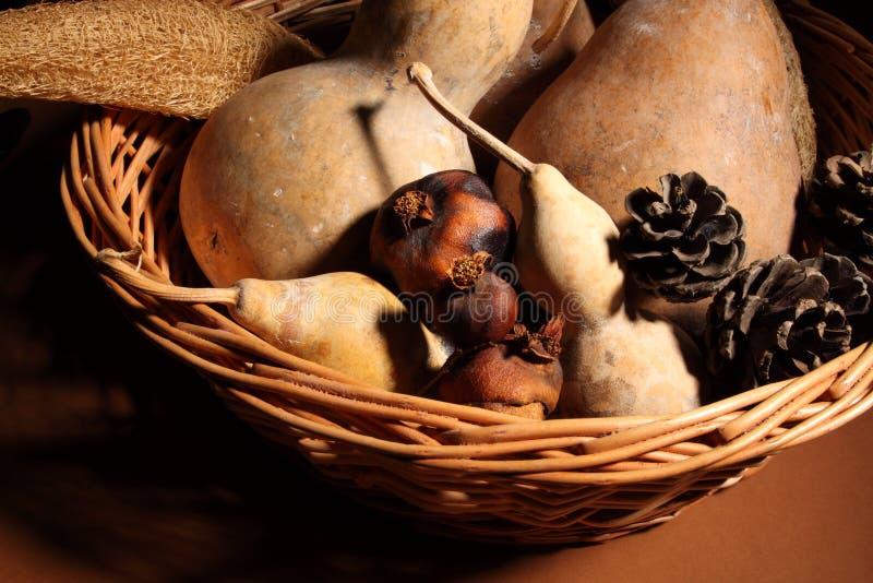 Download Cucurbit stock photo. Image of pinecone, sear, calabash - 26300586