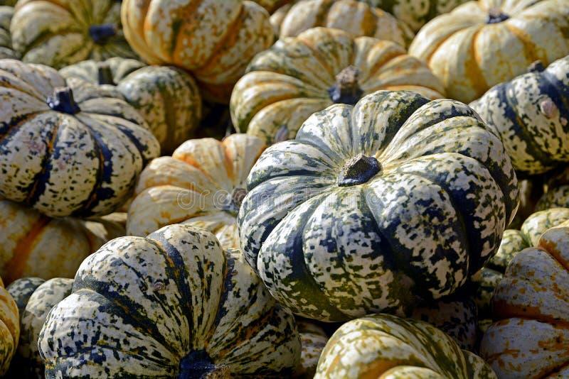 Овощ, сквош зимы, Cucurbita, продукция
