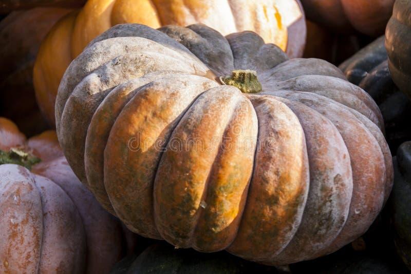 Cucurbita-Kürbiskürbise Muscade Des Provence vom Herbst lizenzfreies stockfoto