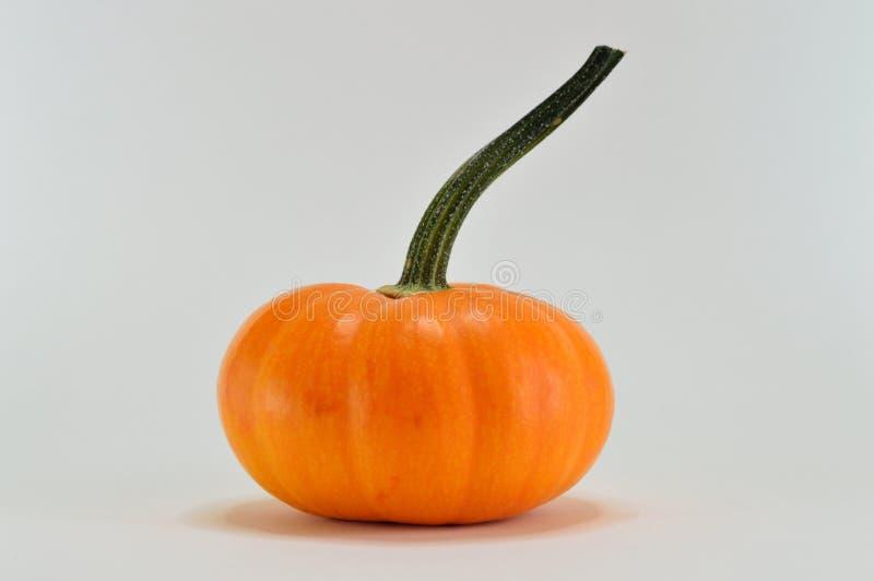 Cucurbita, Winter Squash, Calabaza, Pumpkin royalty free stock photo