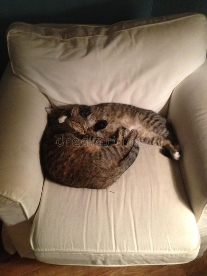Cuddling cats stock image