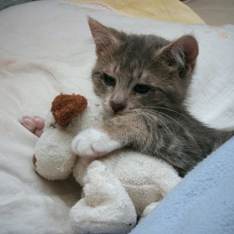 Cuddly kitten royalty free stock photos