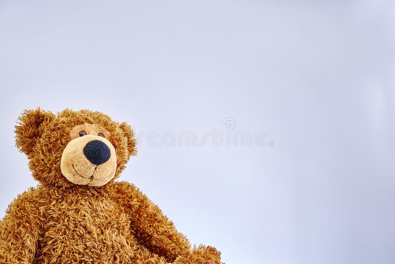 Cuddly Toy Bear royalty free stock images