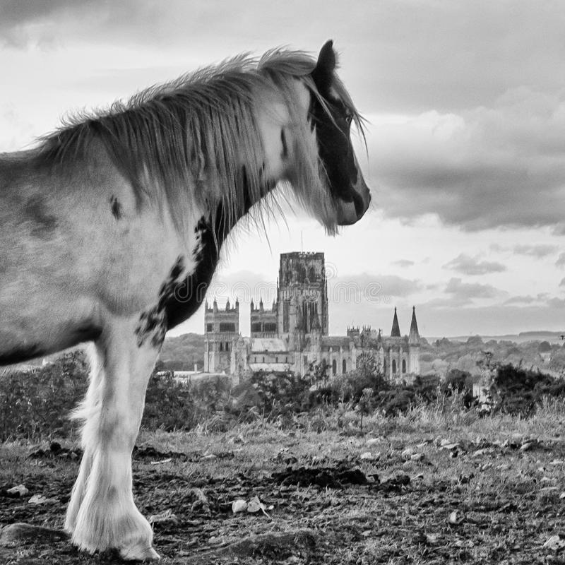 A cuddy overlooks the historic Coal mining capital of Durham City. A cuddy or pit pony looks onto the cityscape of Durham and its cathedral, evoking the historic royalty free stock photos