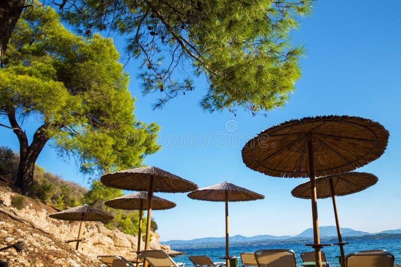 Cudowna plaża pod sosnami obrazy royalty free