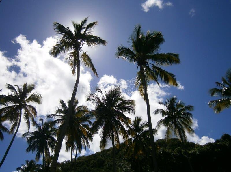 Cudowni drzewka palmowe przed niebieskim niebem fotografia stock
