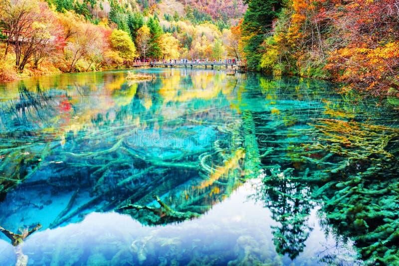 Cudowni zanurzający drzewni bagażniki w wodzie Pięć Kwiat jezioro obrazy stock