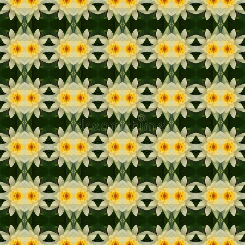 Cudowny żółty lotos w pełnym kwiacie bezszwowym ilustracja wektor