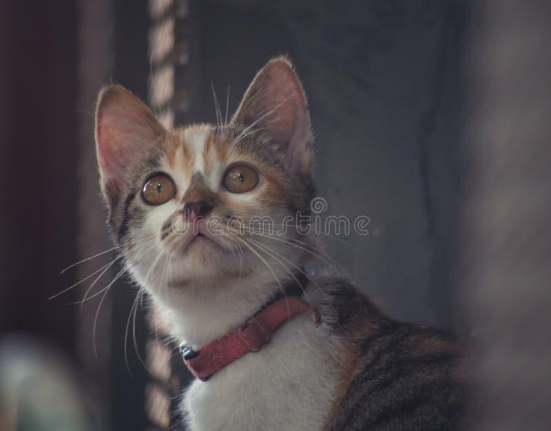 cudowny kota zdjęcia stock