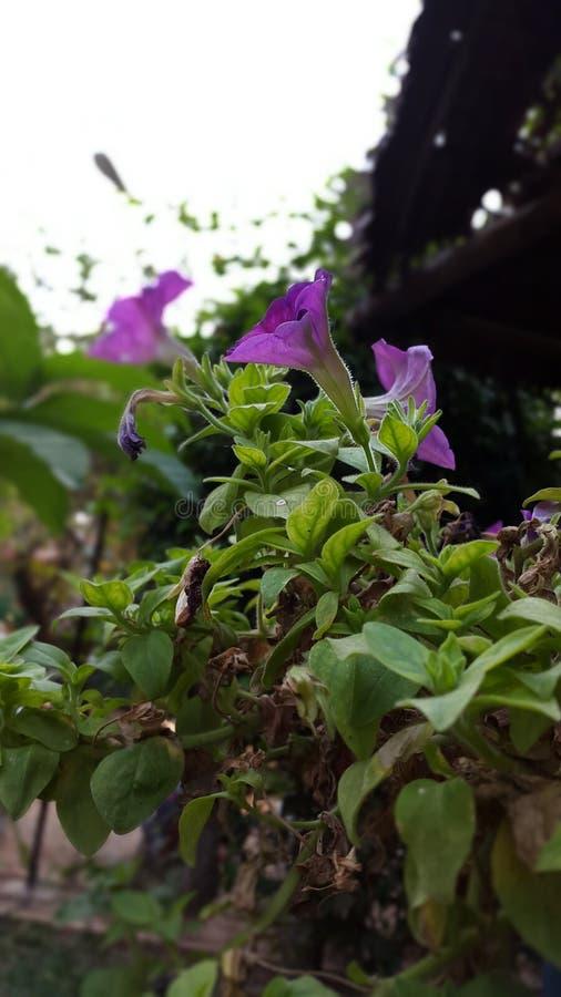 cudowny kwiat obraz stock
