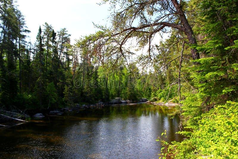 """Cudowny letni dzieÅ"""": PiÄ™kny jezioro w kanadyjskim lesie zdjęcie royalty free"""