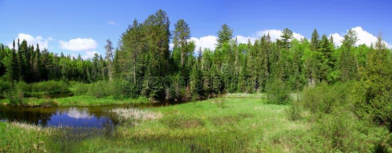 Cudowny letni dzień: Piękny staw w kanadyjskim lesie zdjęcie stock