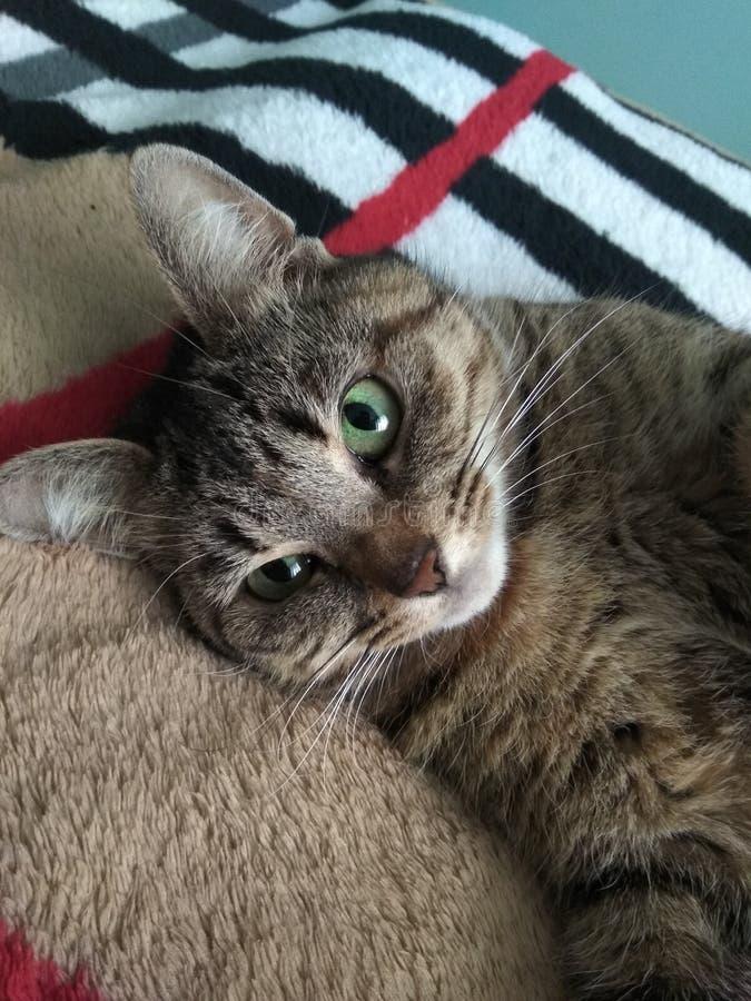 cudowny mojego kota zdjęcie royalty free