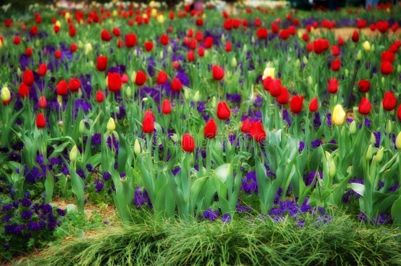cudowny ogród obraz stock