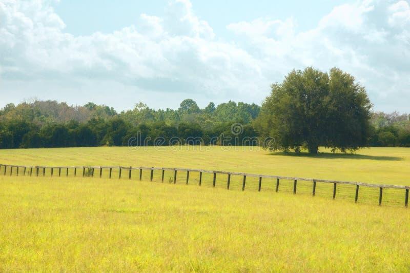 cudowny pastwisko lato obrazy royalty free