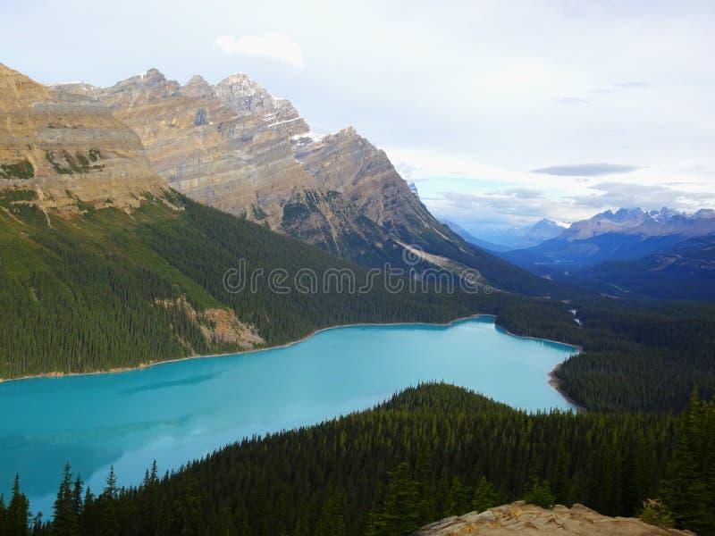 Cudowny Peyto jezioro w Banff parku narodowym w Alberta, Kanada fotografia royalty free