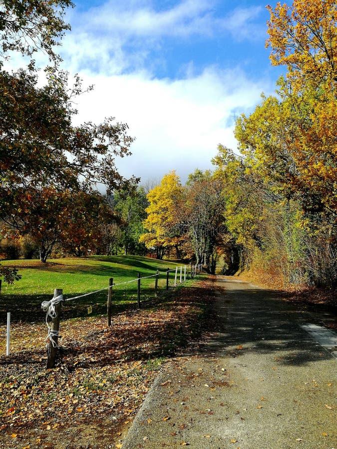 Cudowny Złoty jesień krajobraz obraz royalty free