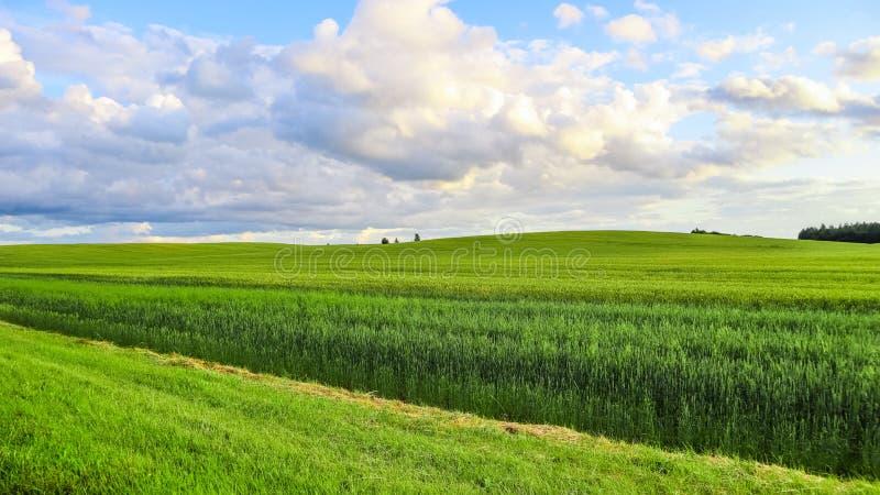 Cudowny zieleni pole, wzgórza, drzewa i niebieskie niebo z chmurami w wsi, niebieska spowodowana pola pe?ne si? chmura dzie? ziel zdjęcie stock