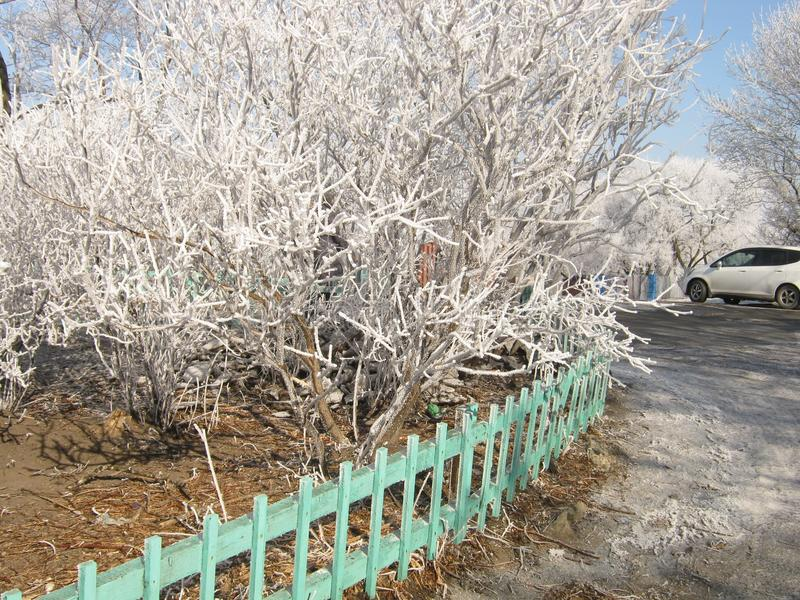 Cudy zimy natura obrazy royalty free
