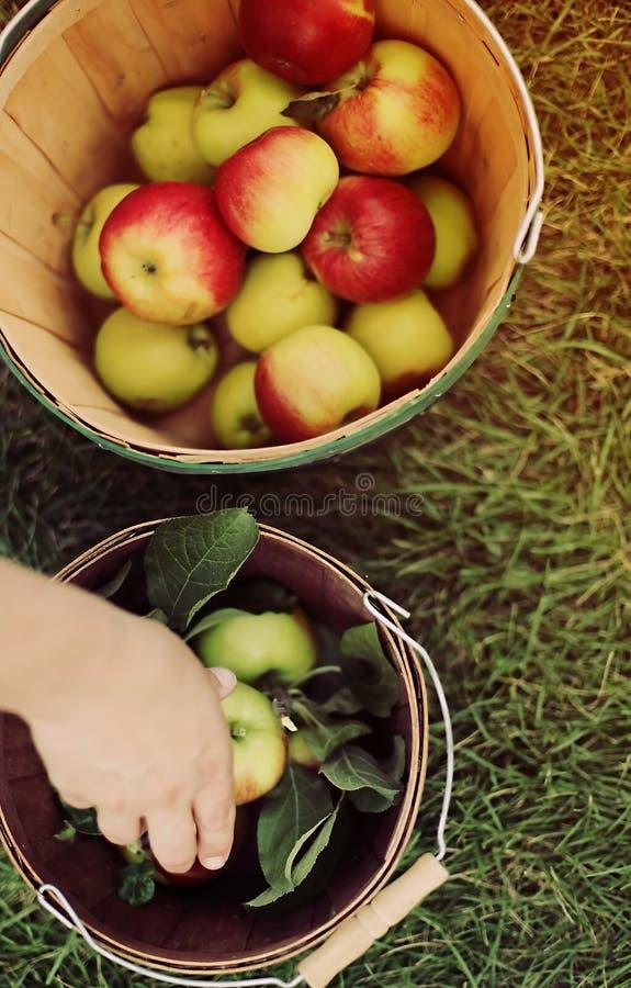Cueillette d'Apple photos stock