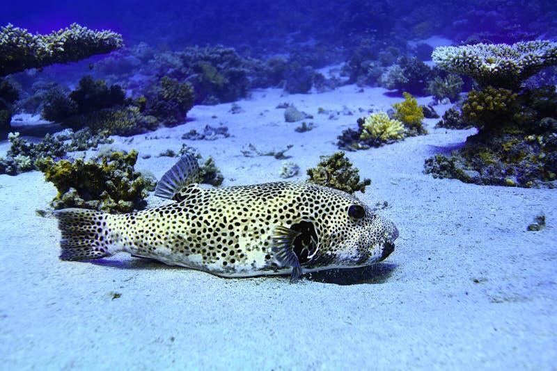 Cuenco de los pescados del fumador foto de archivo libre de regalías