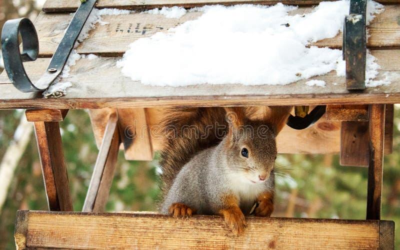 Cuento de hadas del invierno de una proteína fotografía de archivo libre de regalías