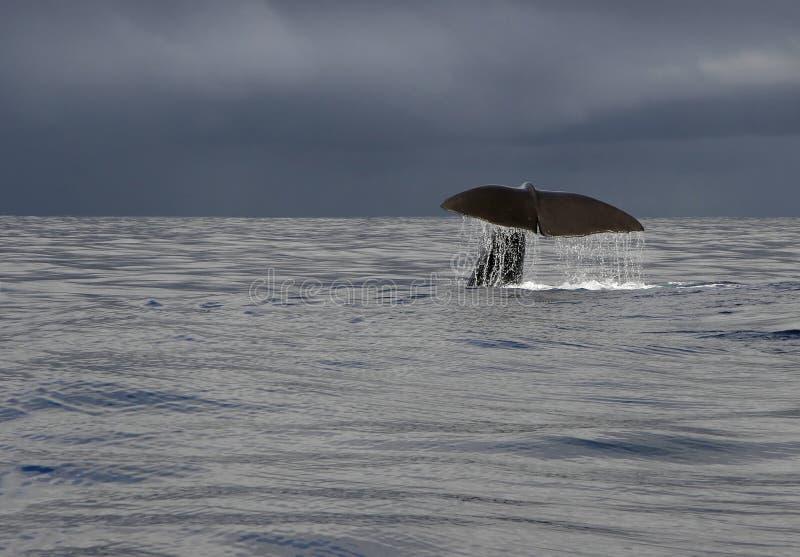 Cuento de la ballena fotografía de archivo