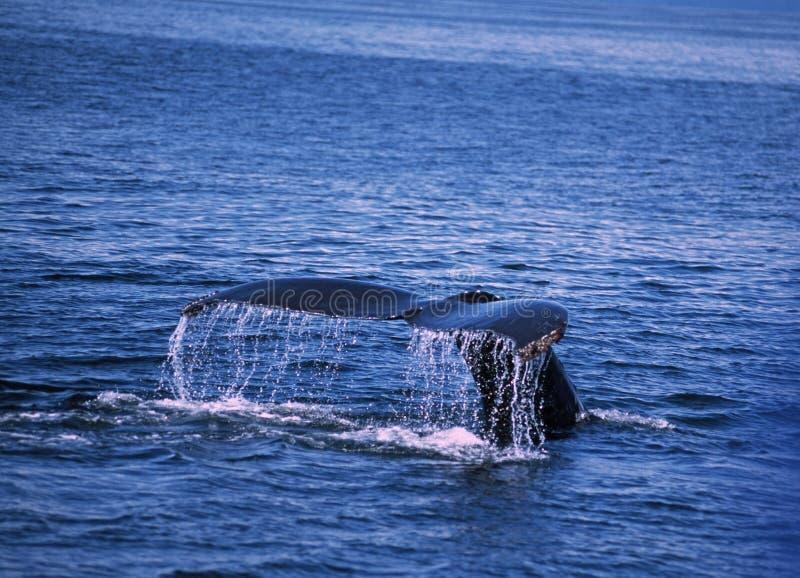 Cuento de la ballena imagen de archivo
