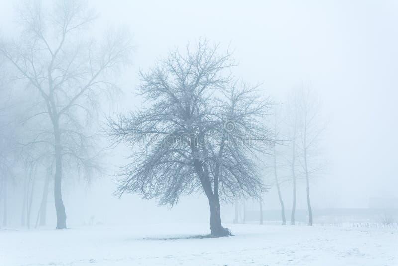 Cuento del ` s del invierno imágenes de archivo libres de regalías
