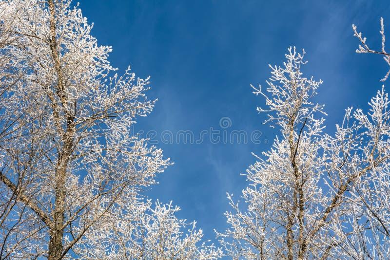 Cuento del ` s del invierno foto de archivo libre de regalías