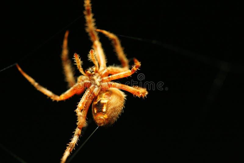 Cuerda de rosca del shooting de la araña fotografía de archivo