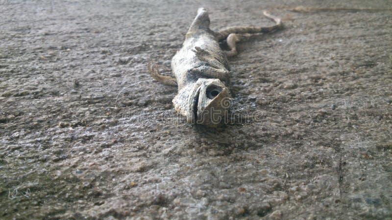 Cuerpo del lagarto imagen de archivo