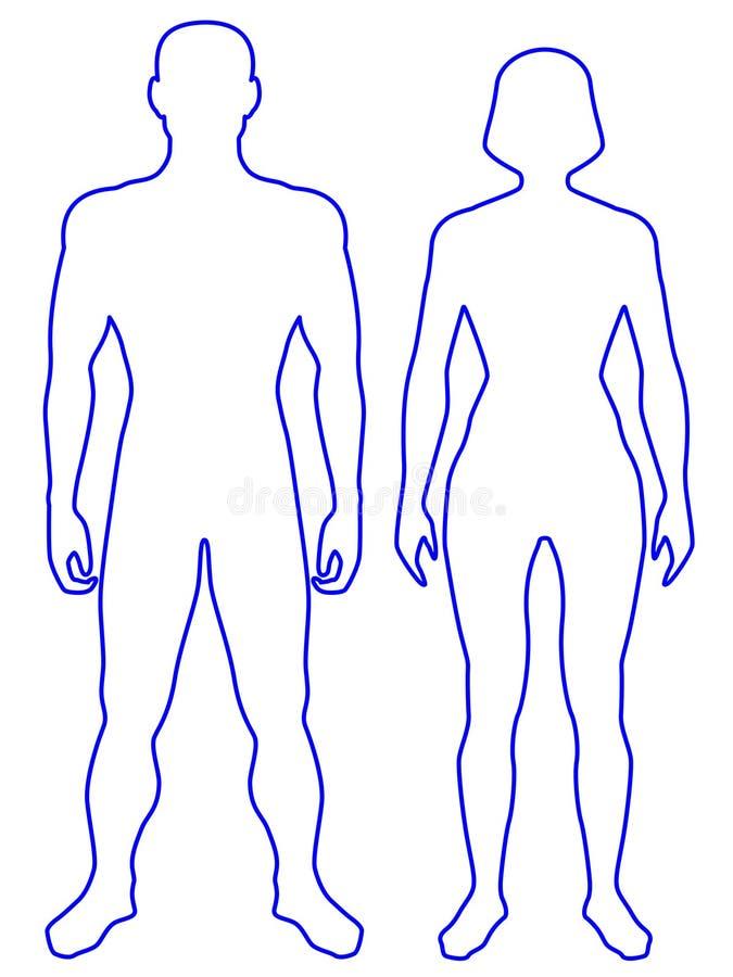 Cuerpo humano ilustración del vector. Ilustración de delineación ...