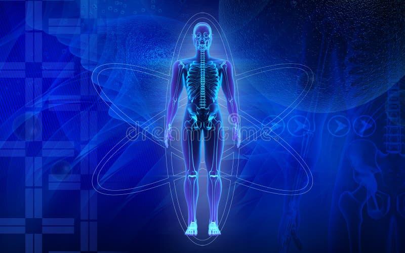 Cuerpo humano stock de ilustración