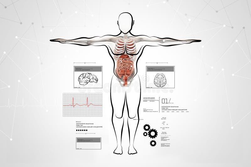 Cuerpo Humano Con El Sistema Digestivo Stock de ilustración ...