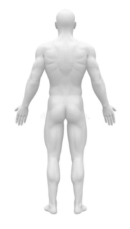 Figura en blanco de la anatomía - visión trasera ilustración del vector