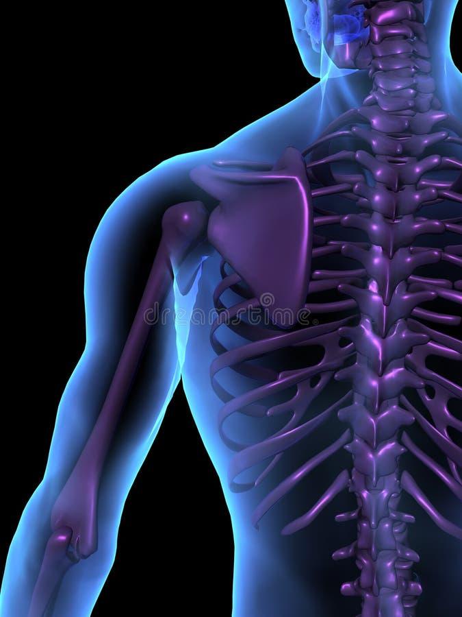 Cuerpo humano y esqueleto masculinos de la ilustración de la radiografía stock de ilustración