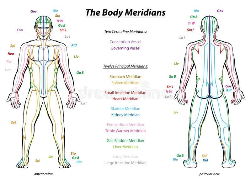 Cuerpo masculino de sistema de la carta meridiana de la descripción libre illustration