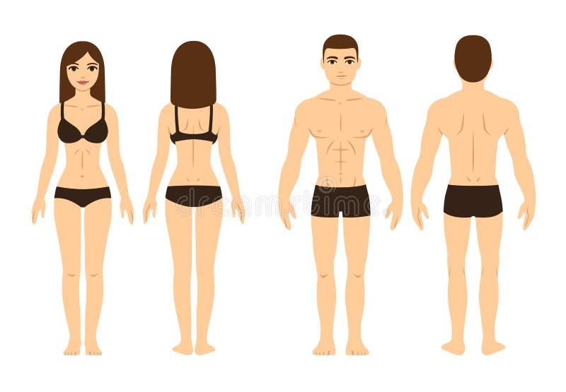 Cuerpo masculino y femenino stock de ilustración