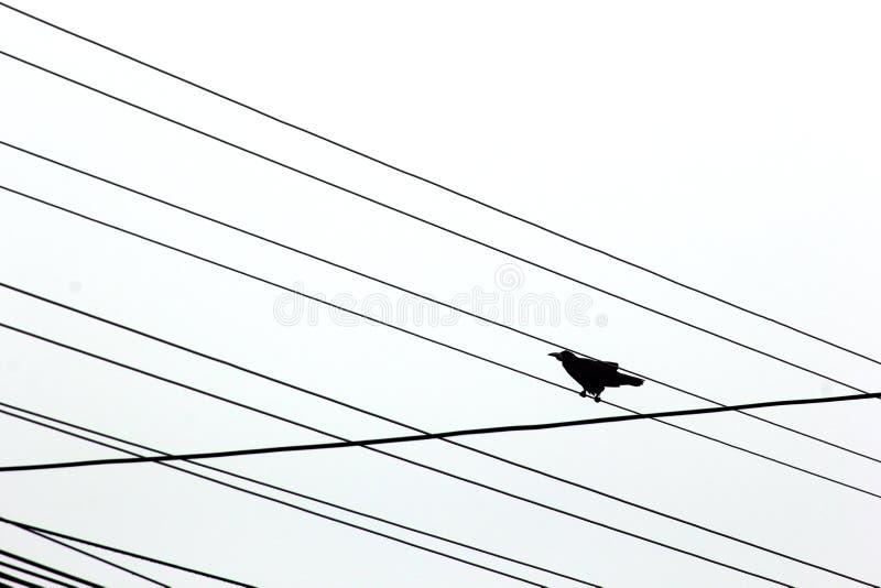 Cuervo imagen de archivo
