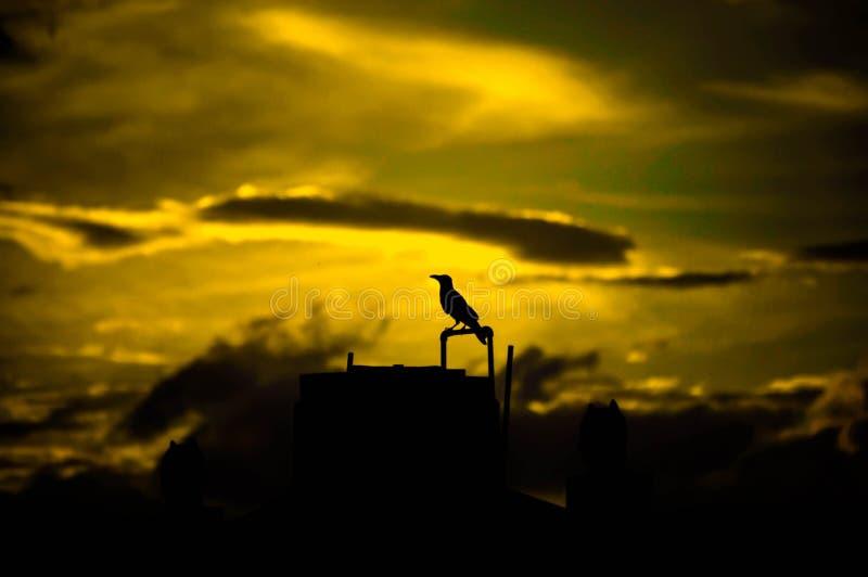 Cuervo de Silhoutte de la puesta del sol fotografía de archivo