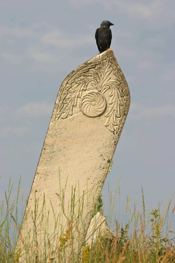 Cuervo en una piedra sepulcral fotos de archivo