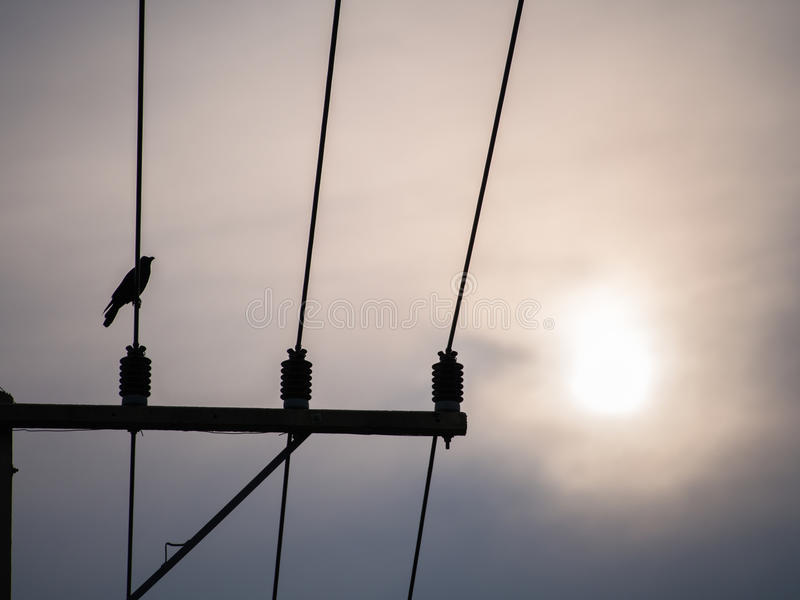 Cuervo encaramado en alto voltaje foto de archivo
