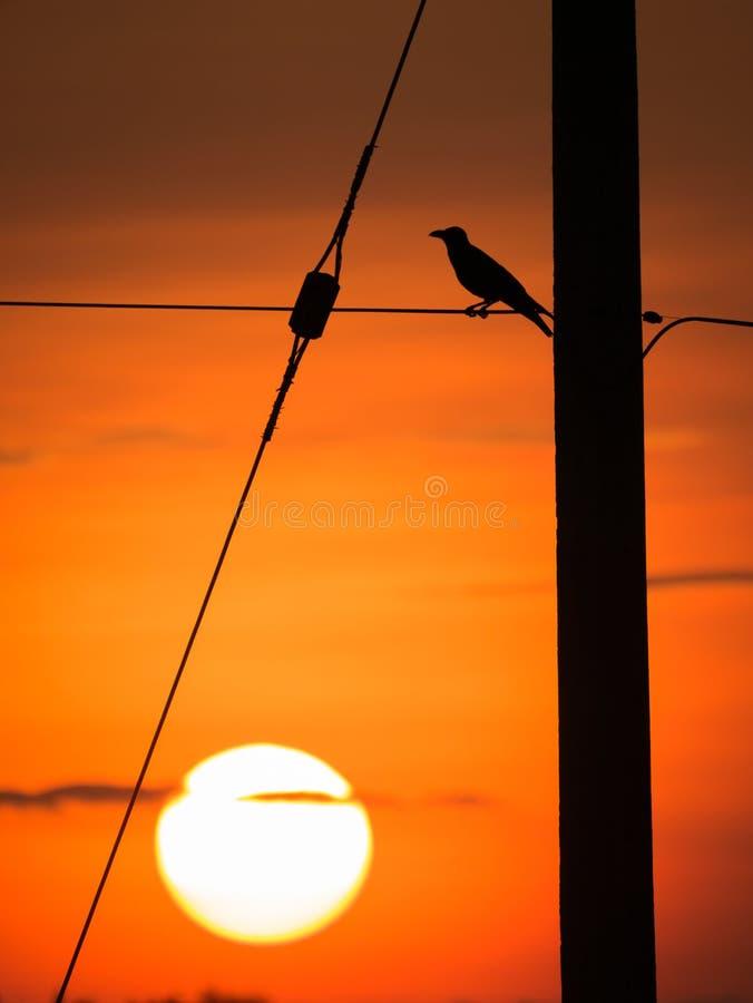 Cuervo encaramado en el alambre detrás de The Sun foto de archivo libre de regalías