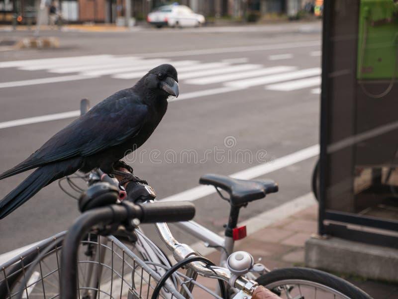 Cuervo encaramado en la bicicleta imagen de archivo libre de regalías