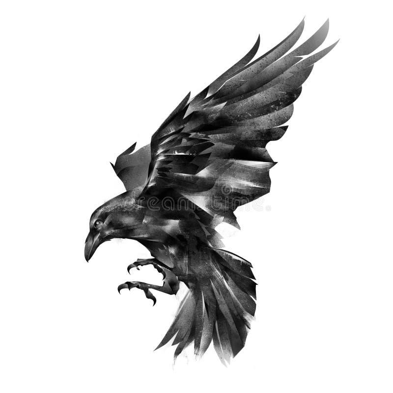 Cuervo pintado en un fondo blanco stock de ilustración