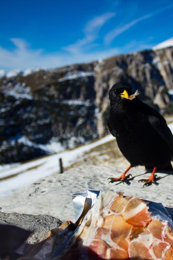Cuervo que come mi almuerzo imágenes de archivo libres de regalías