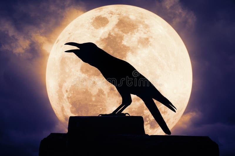 Cuervo que se sienta en la roca y los croares contra la Luna Llena imágenes de archivo libres de regalías