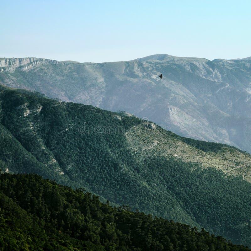 Cuervo que vuela sobre las colinas foto de archivo libre de regalías